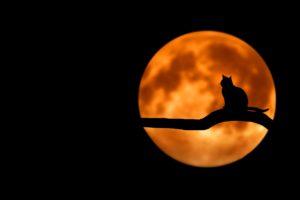 La Lune aurait un certain impact sur les animaux qui possèdent une horloge biologique circa-lunaire